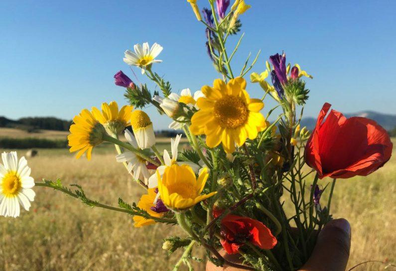 Fleurs Baratti